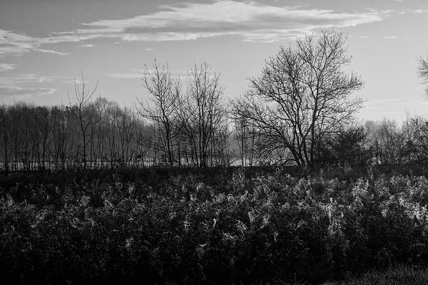 La Toile du Marais