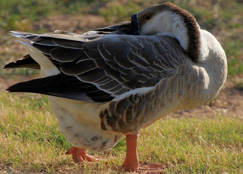 duckpondaugust0812.jpg