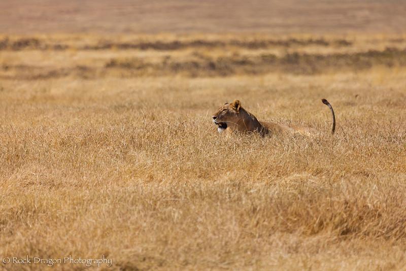 Ngorongoro-35.jpg
