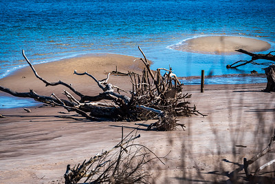 Driftwood Beach  Ga.  / Boneyard Beach, Amelia Is, Fl.