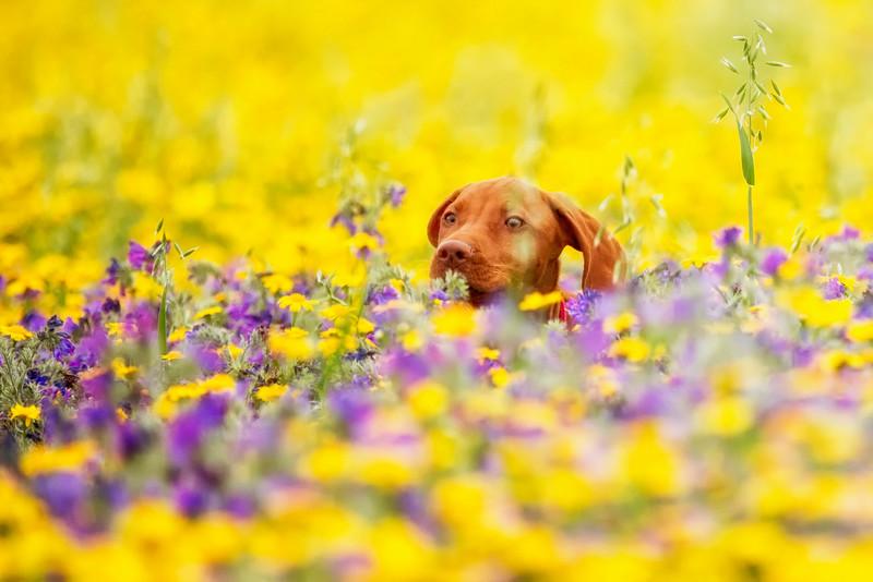 Dogs_Bosca_Cornwall_2014_FH0T7869.jpg