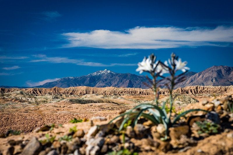 Blooming flowers in foreground with mountains in background