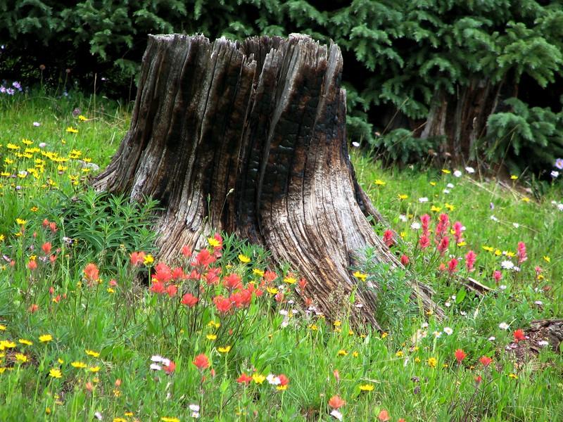 amh FLOWERS (1339).jpg