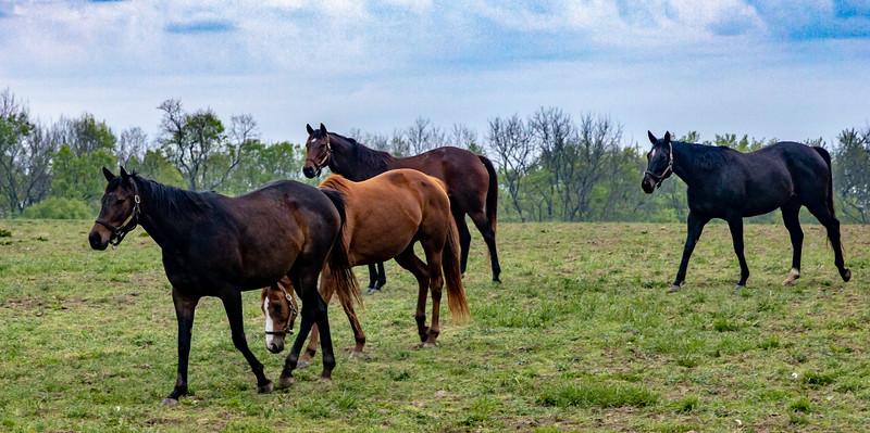 Manchester Horse Farm Lexington KY  April 25, 2019   029.jpg