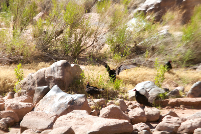 2014_Grand_Canyon_WHDW2_7D 57