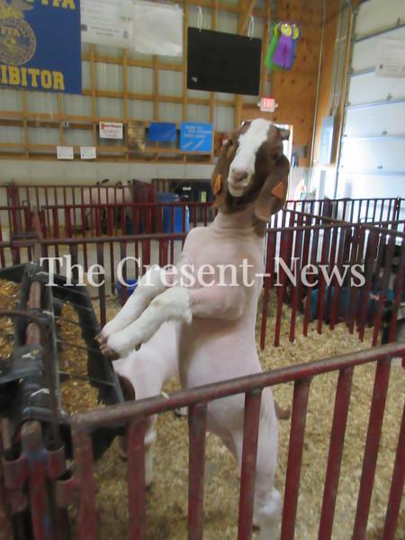 06-13-19 news fair features