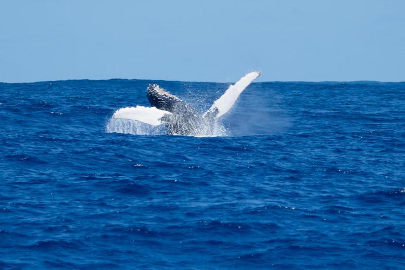 whales-leila-55.jpg
