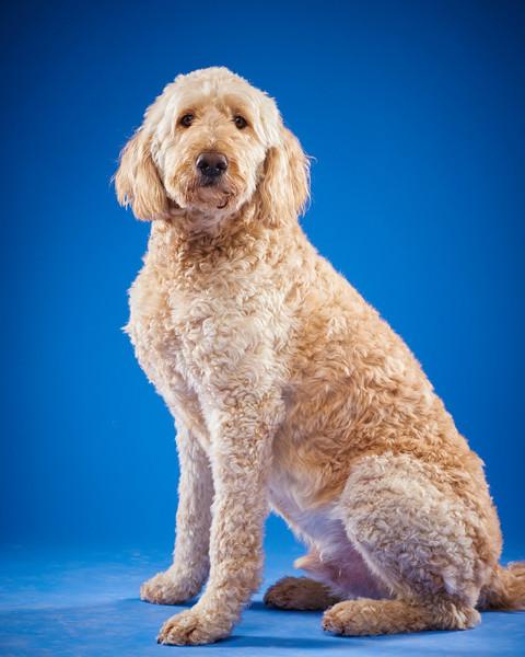 2016_12_24_Christmas Dogs4185 1 1.jpg