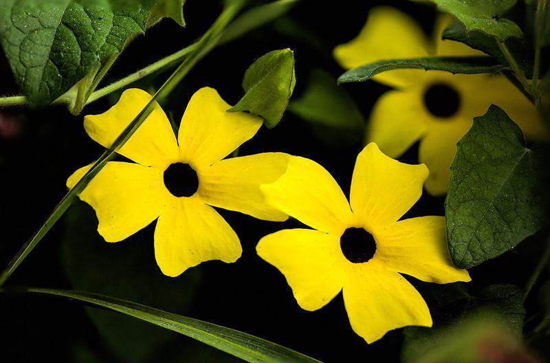 Gibbs flowers focus stacklowres.jpg