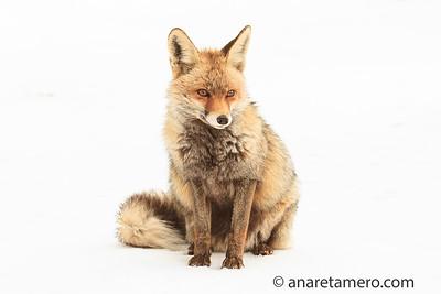 Other mammals/ Otros mamíferos
