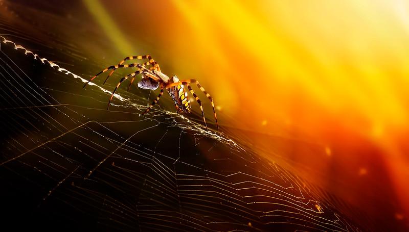 Spiders-Arachnids-177.jpg