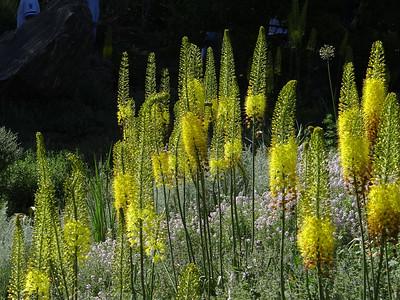 Botanic Gardens , June, 2017