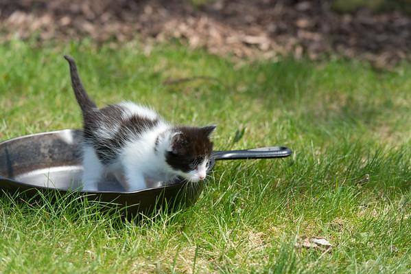 Laston Kitties 4-28-18