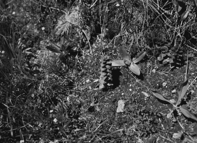 Oberalppass - Sedrun 17.7.2016 (analog)