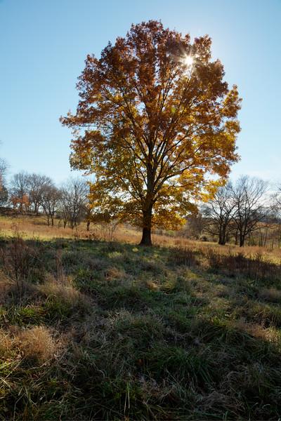 Stones River Bend Park