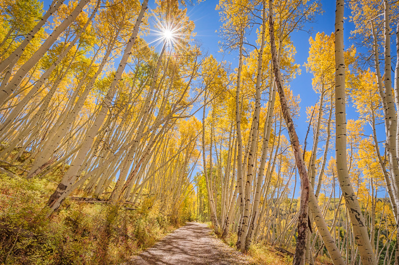 Aspen Lane, Colorado