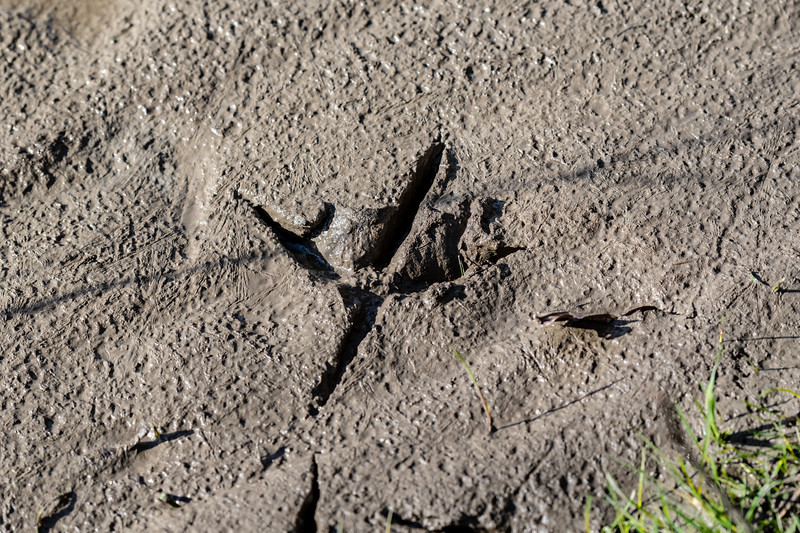 footstep in the mud-14.jpg