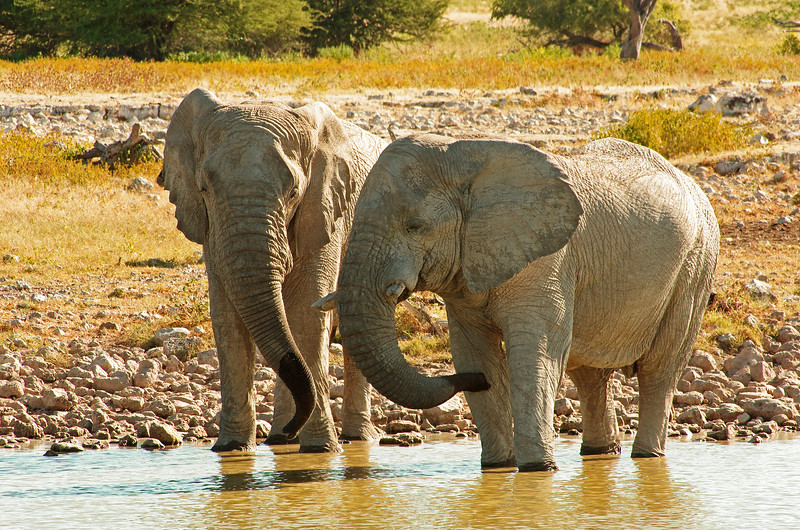 Courting elephants