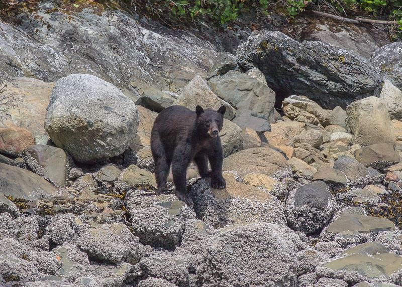 Bear on a Beach