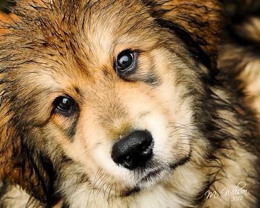 Ruby Roo- I love you! name