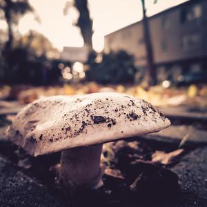Pilze auf Parkplatz - Schönheit am Strassenrand