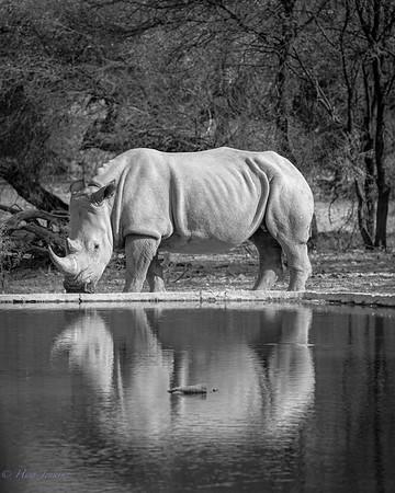 Monochrome wildlife