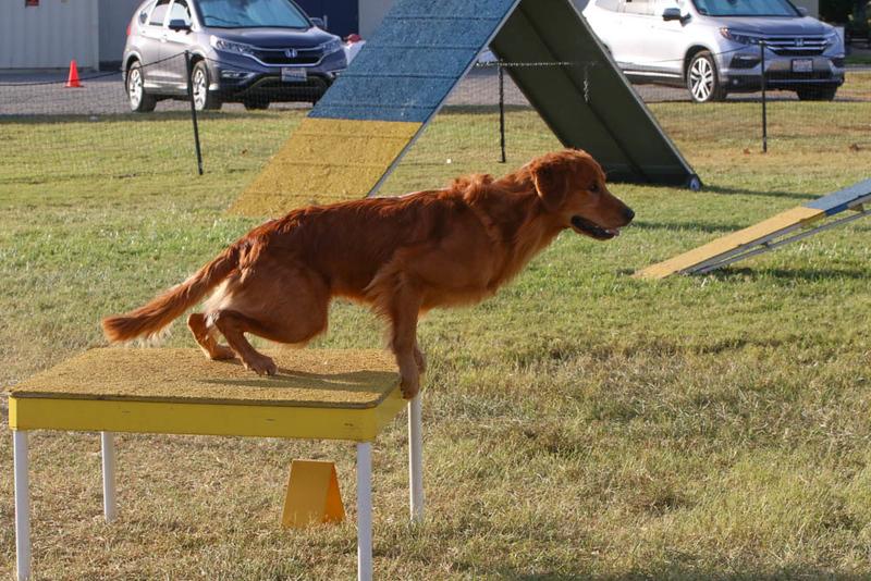 11-4-2018 Border Terrier-2484.jpg