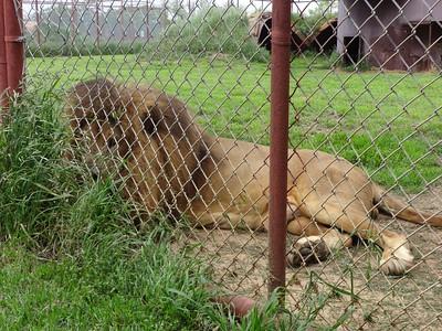 Big Cat CARE Sanctuary 4-12-15