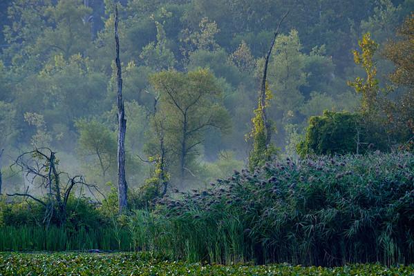 Beaver Marsh 2013