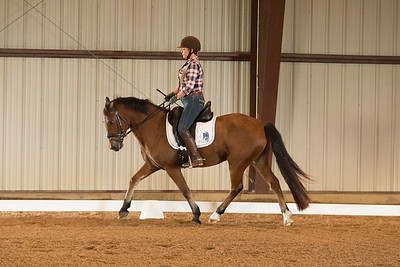 Horse 372