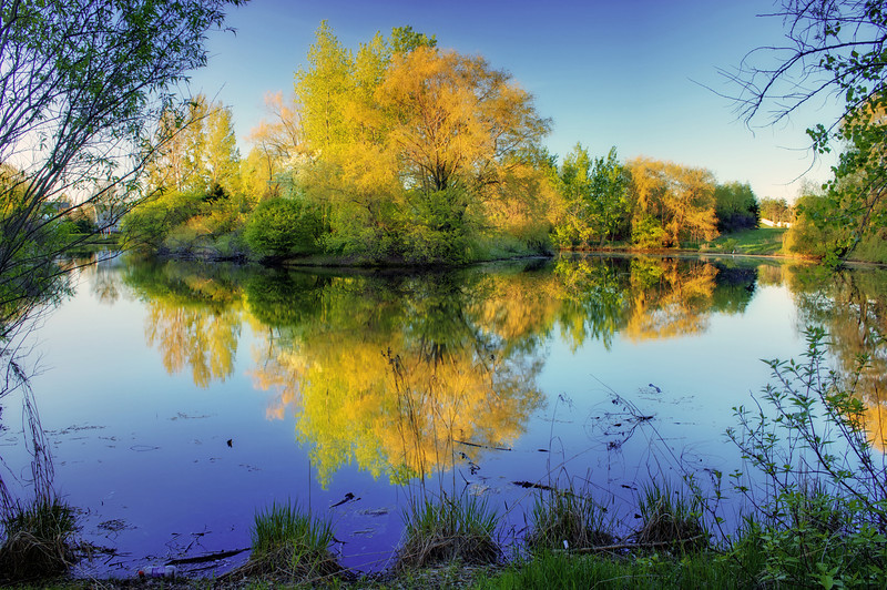 Pond Tree Reflection HDR.jpg