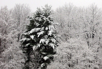 Snow Photos, Ryan Fannock, Tamaqua (3-23-2011)