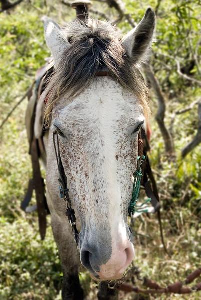 HORSE19-(10).jpg