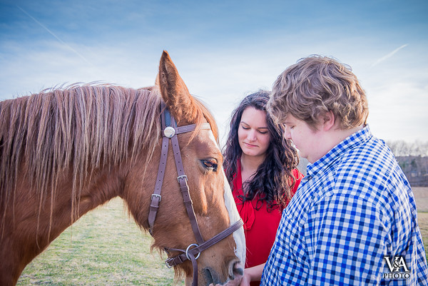 Vinnie the Mustang: Equestrian Photo Session