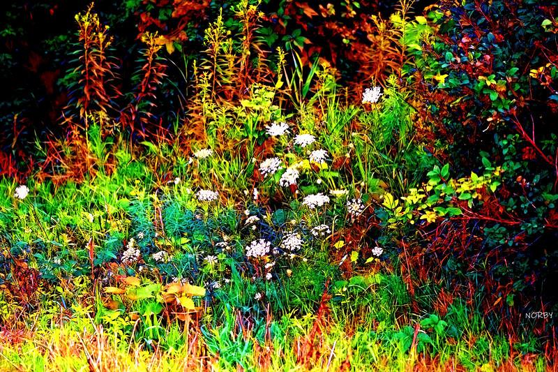 WHITE STUFF WM Painnt_Creation_2020-07-26_105601.jpg