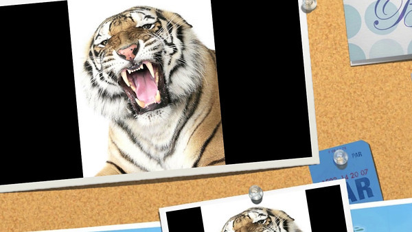 Tiger Film 2011