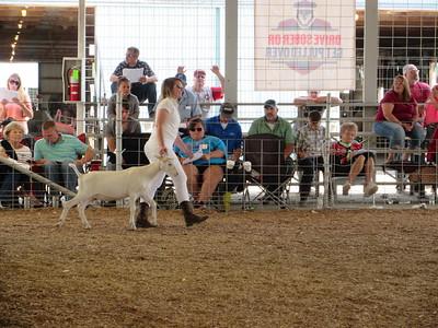 08-25-17 NEWS livestock ring