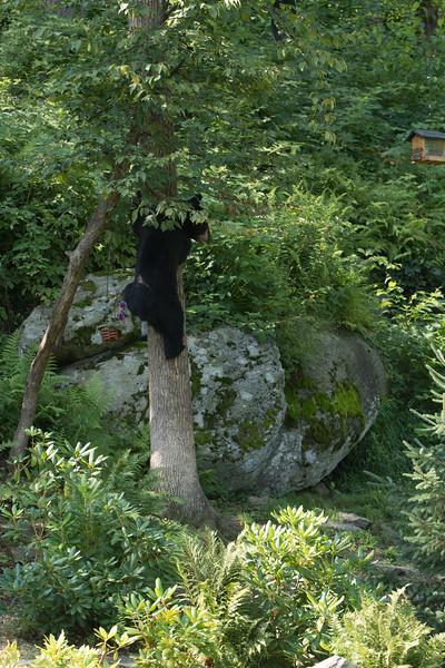 Bear in Yard (126 of 232).jpg