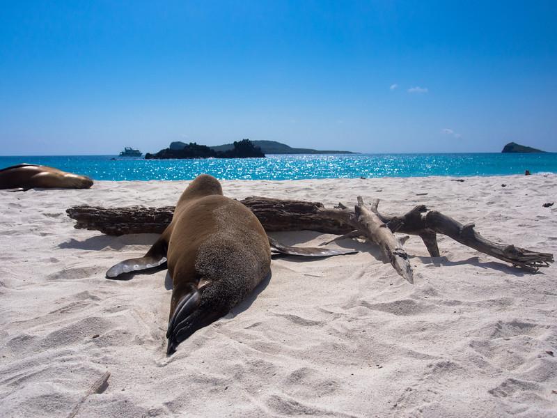 sea lion beach branch.jpg