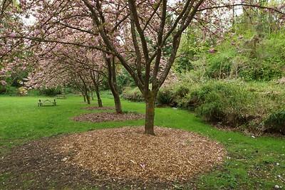 Japanese Garden, Arboretum, 4-15
