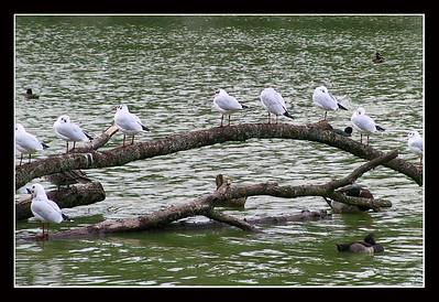 Parc des Oiseaux  Villars-les-Dombes (France)