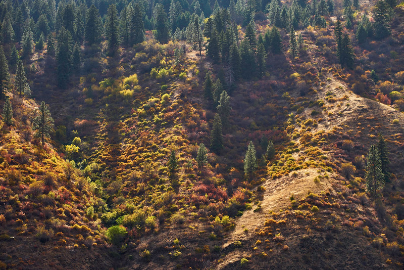Salmon Canyon Afternoon Light Oct.jpg