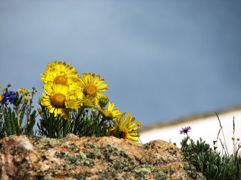 amh FLOWERS (1447).jpg