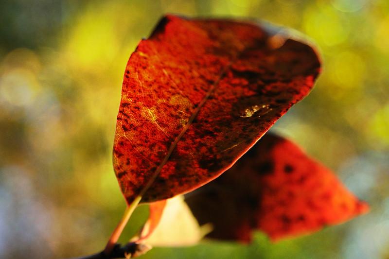 LTD_2012-10-22_0684_4