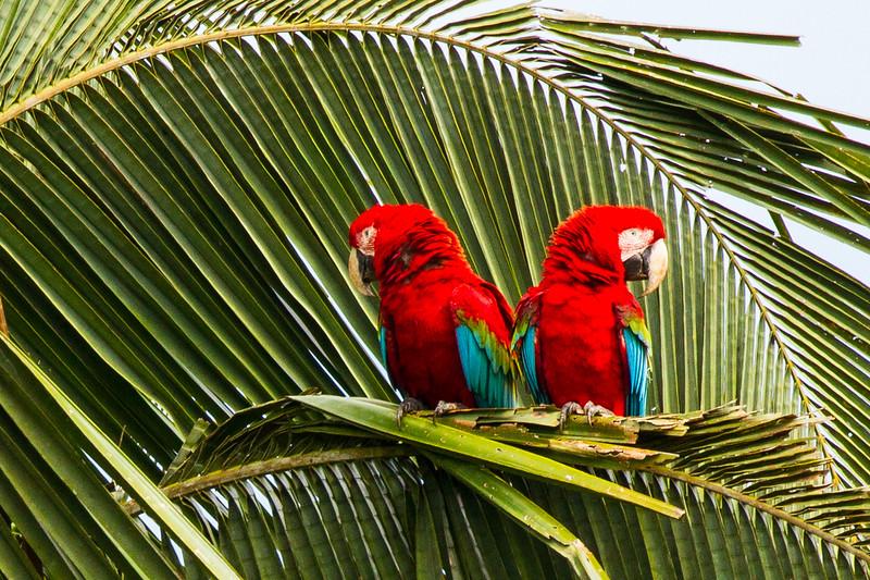 Rainforest32.jpg