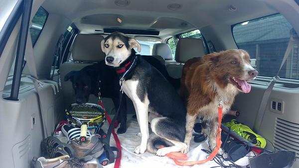 08.11.13 Laurel Hill Park Dog Lost