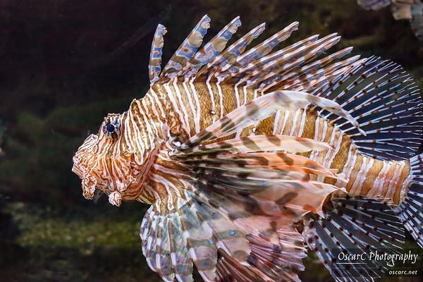 Georgia Aquarium (2011)