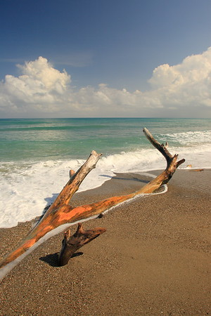 Driftwood washed ashore on a beach near Carbarete, Dominican Republic. © 2006 Kenneth R. Sheide