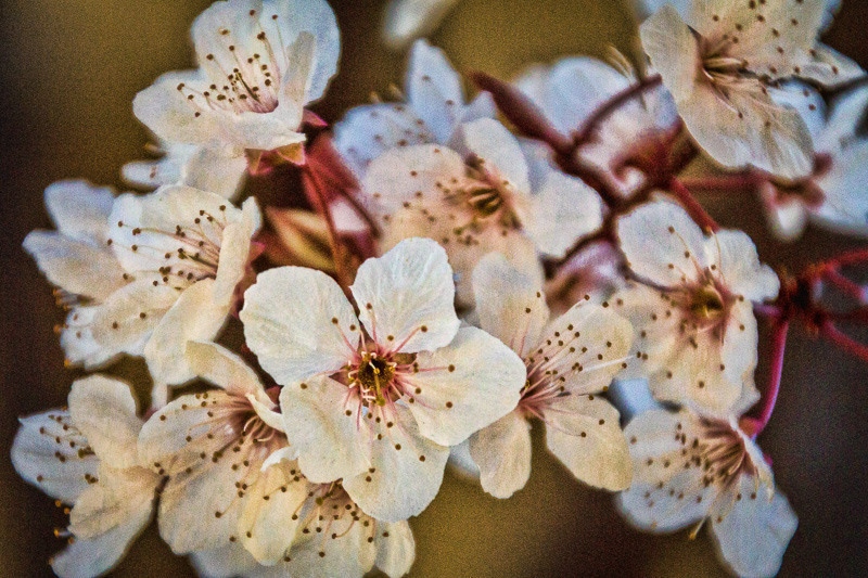 feb 28 - flowers.jpg