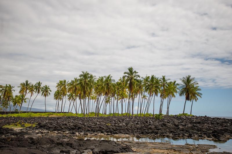 Hawaii2019-359.jpg